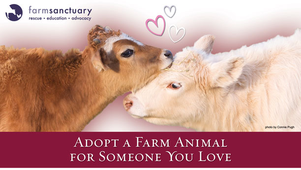 Adopt a Farm Animal for Someone You Love