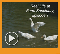 Reel Life at Farm Sanctuary
