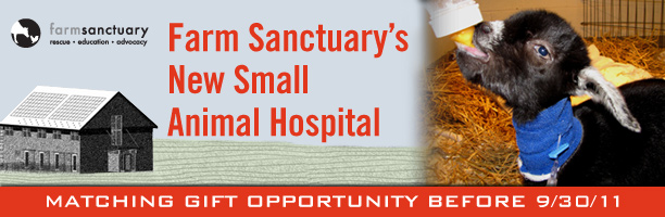 Farm Sanctuary's New Small Animal Hospital