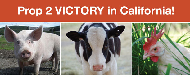 Victory for Farm Animals