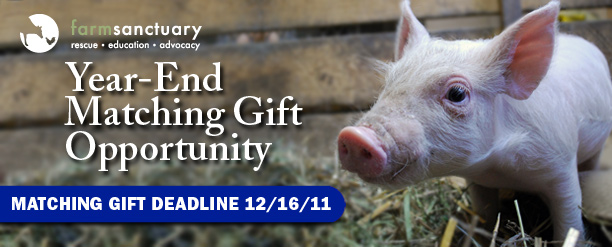 Farm Sanctuary year-end matching gift opportunity