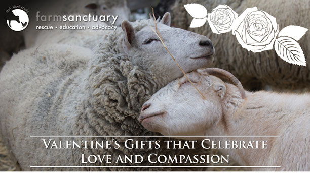 Valentine's Gifts that Celebrate Love and Compassion