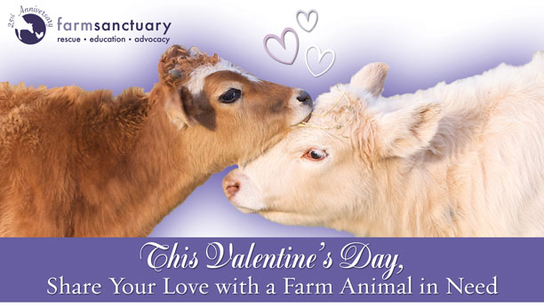 This Valentine's Day, Share Your Love with a Farm Animal in Need