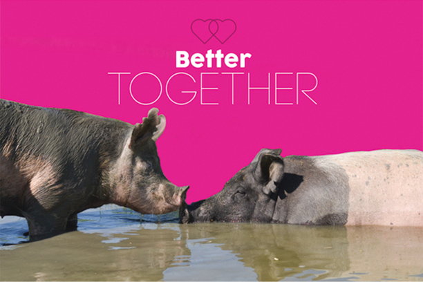 Share your love for farm animals this Valentine's Day