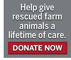Donate now to give rescued farm animals a lifetime of care!