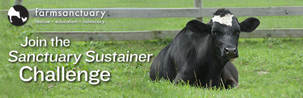 Join the Sanctuary Sustainer Challenge