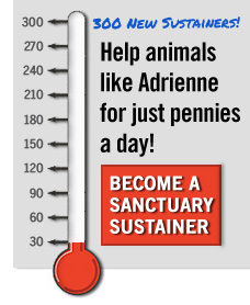 Make monthly gifts to help farm animals.
