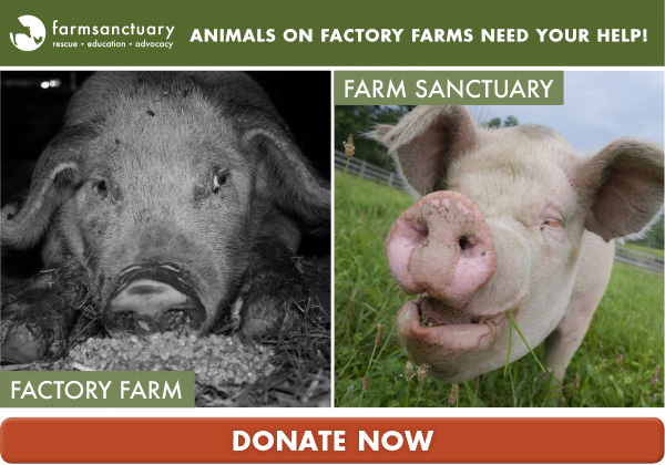 Animals on factory farms need your help!