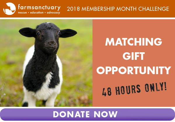 Donate and have your gift matched