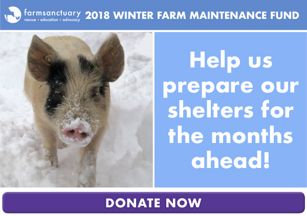 Help us prepare our shelters for the months ahead!