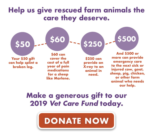 Help us give rescued farm animals the care they deserve.  ●Your $50 gift can help splint a broken leg.  ●$60 can cover the cost of a full year of pain medications for a sheep like Marlene.  ●$250 can provide an X-ray to an animal in need.  ●And $500 or more can provide emergency care to the next sick or injured cow, goat, sheep, pig, chicken, or other farm animal who needs our help.