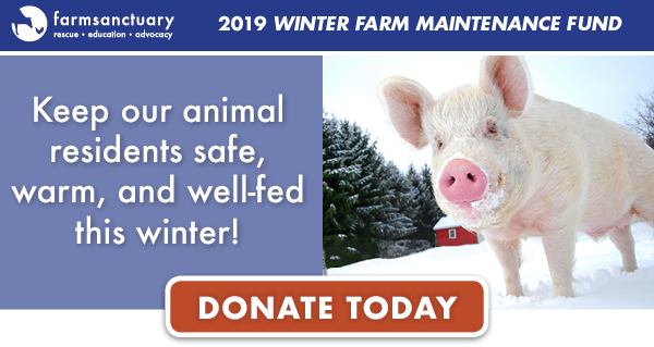 Keep our animal residents safe, warm, and well-fed this winter!