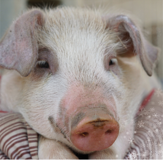 Email - Sponsoring a rescued resident is the perfect holiday