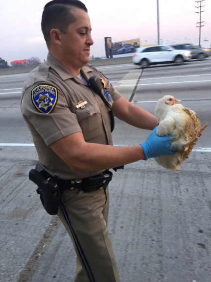 Police officer holding chicken