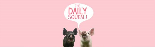 The Daily Squeal: Anna and Maybelle - header