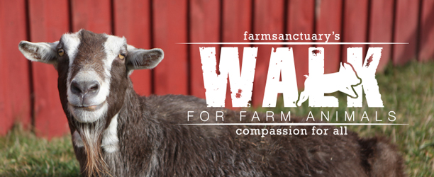 Join the Walk for Farm Animals