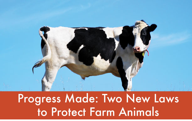 Progress Made: Two New Laws to Protect Farm Animals