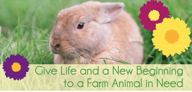Give Life and a New Beginning to a Farm Animal in Need