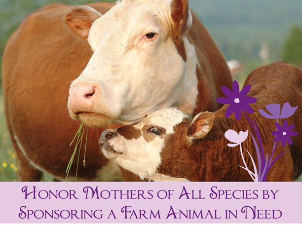 Honor Mothers of All Species by Sponsoring a Farm Animal in Need